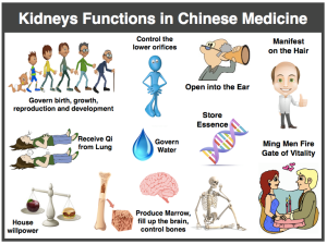 A Familiarized traditional chinese medicine-kidney, 10 таб